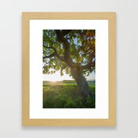 Morning In Danville Framed Art Print