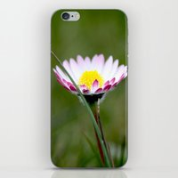 Standing Alone iPhone & iPod Skin