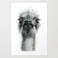 Arrogant Ostrich SK100 Art Print
