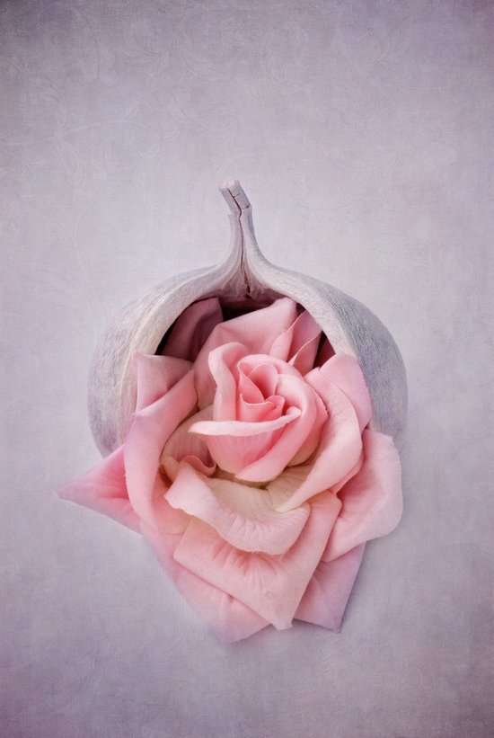 GARDEE - Still life with a pink rose Art Print