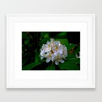 Rhododendron Bloom At Fa… Framed Art Print