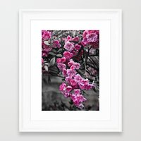 Blossom Rose Tree Framed Art Print