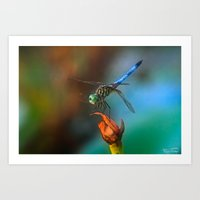 Dragon Fly.... Art Print