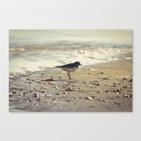Evening Beside the Sea Canvas Print