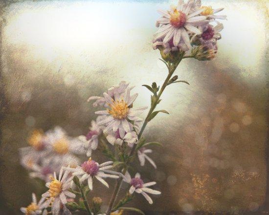 Fall Flowers Canvas Print