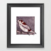 Society Finch Framed Art Print