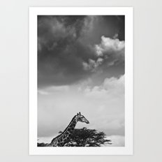 Giraffe under overcast Art Print