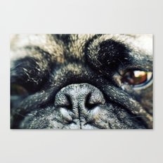 Pug-Nosed Canvas Print