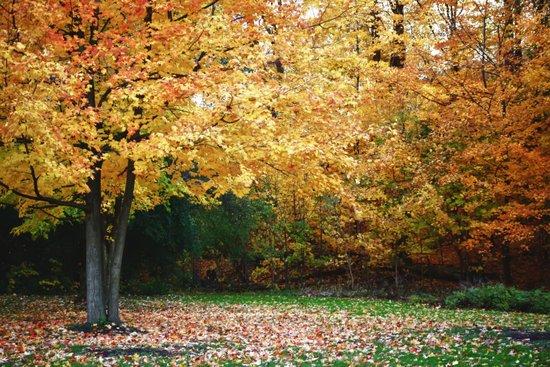 Beautiful Fall Trees Art Print