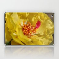 Laptop & iPad Skin featuring Moss Rose by Kealaphotography