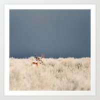 Jackson Hole Deer Art Print