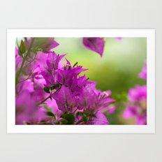 Beautiful  Brazilian flower 218  Art Print