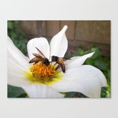 Bees at Work Canvas Print