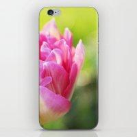Pink Peony Tulip iPhone & iPod Skin