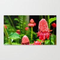 Red Flower Canvas Print