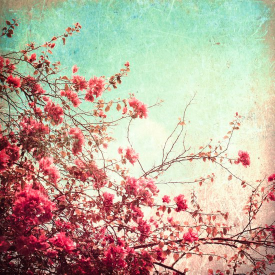 Pink Flowers on a Textured Blue Sky (Vintage Flower Photography) Art Print