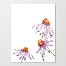 Watercolor Purple Cone Flower Canvas Print