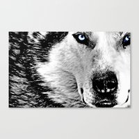 Blue Eyed Wolf Canvas Print