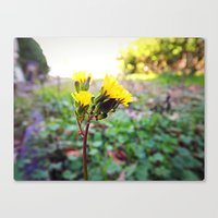 Yellow flowers! Canvas Print
