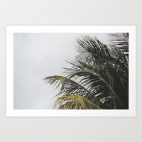 palm treee Art Print