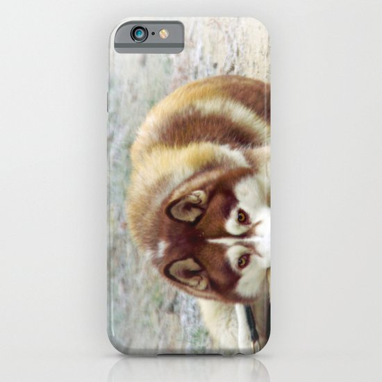 Siberian Husky  iPhone & iPod Case