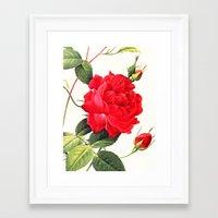 IX. Vintage Flowers Botanical Print by Pierre-Joseph Redouté - Red Rose Framed Art Print