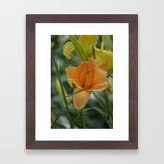 orange lily Framed Art Print