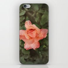 The Vintage Rose iPhone & iPod Skin