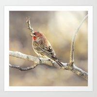 Rosy Little Finch Art Print