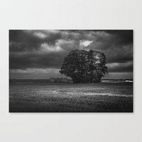 Wood In Storms Canvas Print