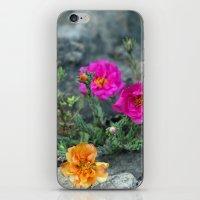 Rock Rose iPhone & iPod Skin