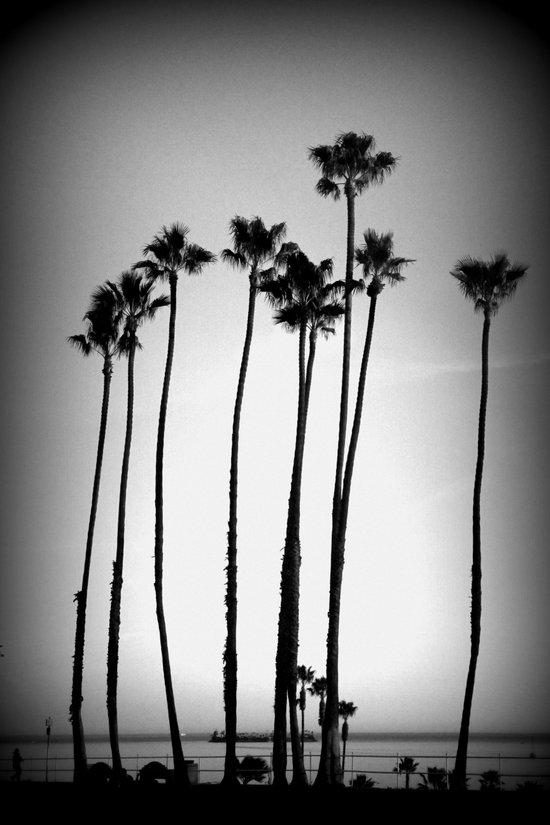 palm trees land Art Print