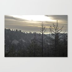 dead trees Canvas Print