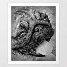 Pug Dog Art Print