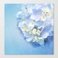 BLUE HYDRANGEA LOVE Canvas Print
