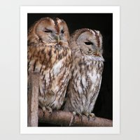 Tawny Owls in Nature Art Print