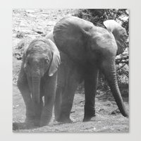Young african elephants Canvas Print