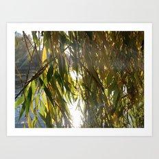 Willow in Morninglight Art Print