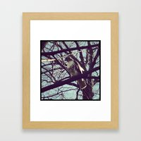 the falcon Framed Art Print