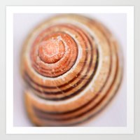 Snail Shell Art Print