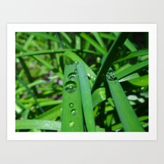 Water droplets Art Print