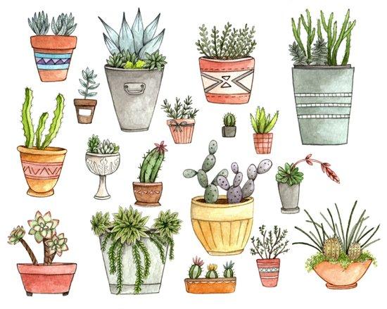 Potted Succulents Canvas Print