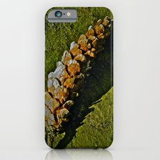 Pine Cone Shadow iPhone 6s Slim Case