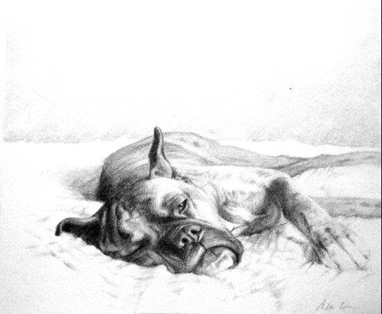 Lazy Mastiff Art Print