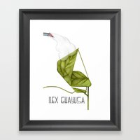 Ilex Guayusa Framed Art Print