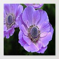 Remembrance Purple Poppy… Canvas Print