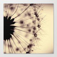 dandelion - droplets of mocha Canvas Print