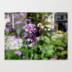The Feast of the Bee Canvas Print