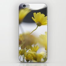 yellow daisies iPhone & iPod Skin
