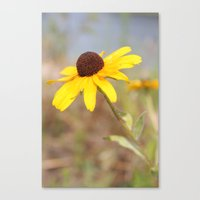 The Wild Black Eyed Susa… Canvas Print